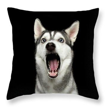 Portrait Of Amazement Siberian Husky Throw Pillow