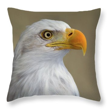 Portrait Of An American Bald Eagle  Throw Pillow