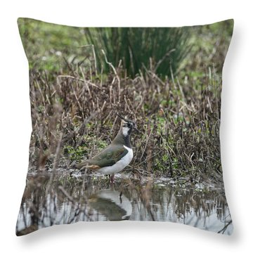Portrait Of Beautiful Lapwing Bird Seen Through Reeds On Side Of Throw Pillow by Matthew Gibson