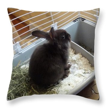 Throw Pillow featuring the photograph Portrait Of Bunbunz by Denise Fulmer