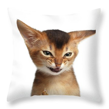 Throw Pillow featuring the photograph Portrait Of Kitten With Showing Middle Finger by Sergey Taran