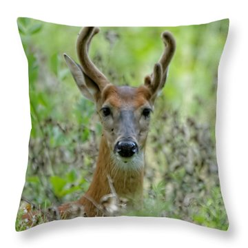 Portriat Of Male Deer Throw Pillow