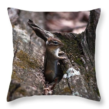 Throw Pillow featuring the photograph Posing #1 by Jeff Severson