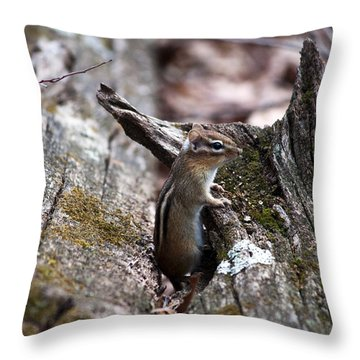 Throw Pillow featuring the photograph Posing #2 by Jeff Severson