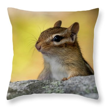 Throw Pillow featuring the photograph Posing Chipmunk by Betty Pauwels