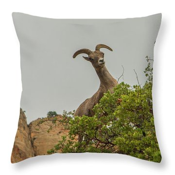 Posing For The Camera 2 Throw Pillow