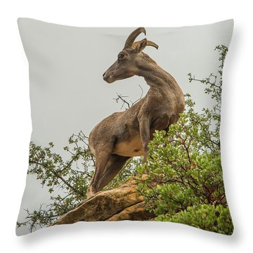 Posing For The Camera Throw Pillow