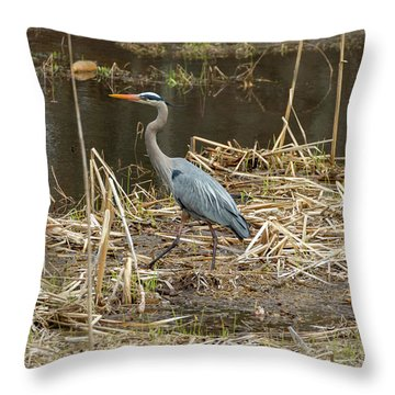 Throw Pillow featuring the photograph Posing Great Blue Heron  by Betty Pauwels