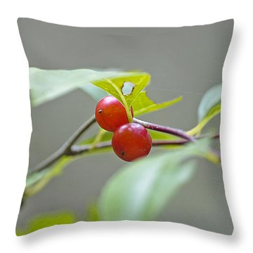 Possum Haw Berries Throw Pillow by Kenneth Albin