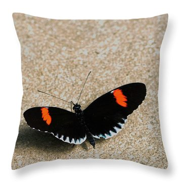 Postman Butterfly Throw Pillow