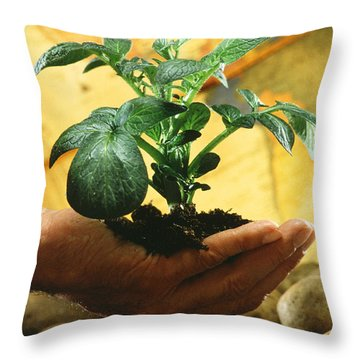 Potato Plant Throw Pillow by Science Source