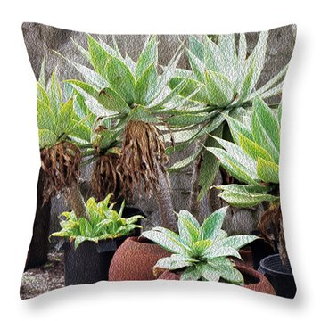 Potted Agave Plants Throw Pillow