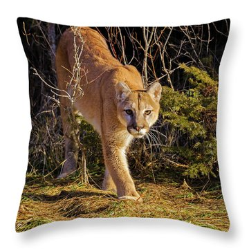 Power And Grace Throw Pillow by Jack Bell