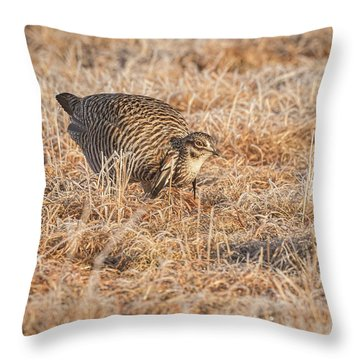 Throw Pillow featuring the photograph Prairie Chicken 11-2015 by Thomas Young