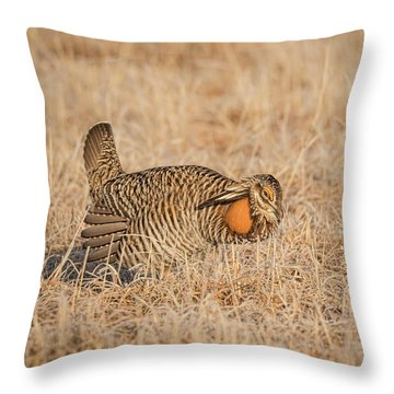 Throw Pillow featuring the photograph Prairie Chicken 9-2015 by Thomas Young