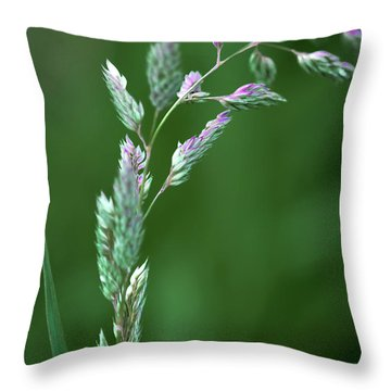 Throw Pillow featuring the photograph Prairie Grass At Dusk by David Perry Lawrence