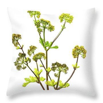 Prairie Parsley Throw Pillow