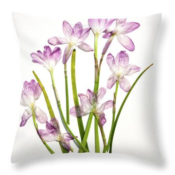 Prairie Rain Lily Throw Pillow