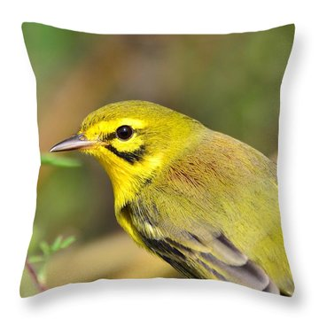Prairie Warbler Throw Pillow by Kathy Gibbons