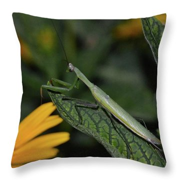 Pray Mantis Dinner Time  Throw Pillow