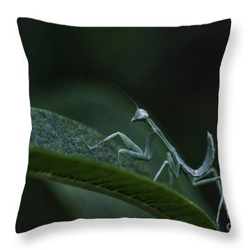 Praying Mantis Baby  Throw Pillow