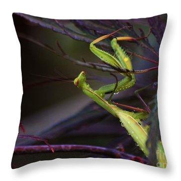 Praying Mantis Throw Pillow by Erica Hanel