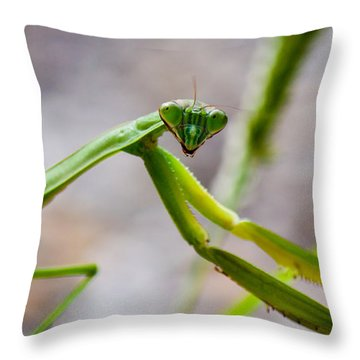 Praying Mantis Looking Throw Pillow by Jonny D
