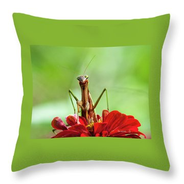 Praying Mantis On Zinnia Throw Pillow