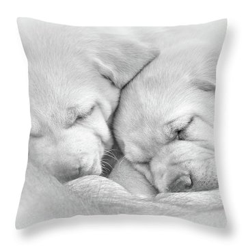 Throw Pillow featuring the photograph Precious Lab Puppies Nursing Black And White by Jennie Marie Schell