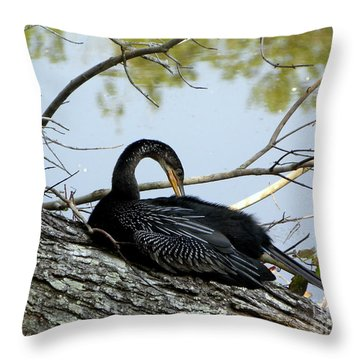 Throw Pillow featuring the photograph Preening Anhinga by Terri Mills