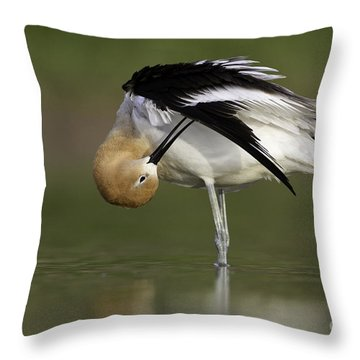Preening Avocet Throw Pillow