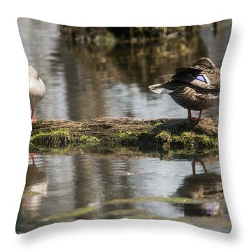 Throw Pillow featuring the photograph Preening Ducks by David Bearden