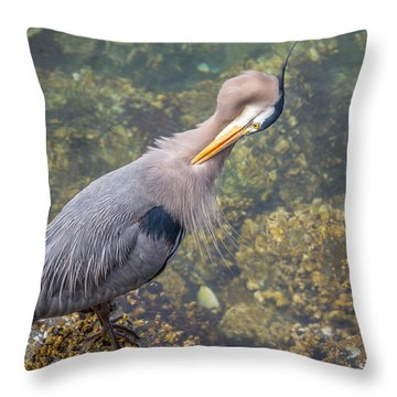 Preening Heron Throw Pillow