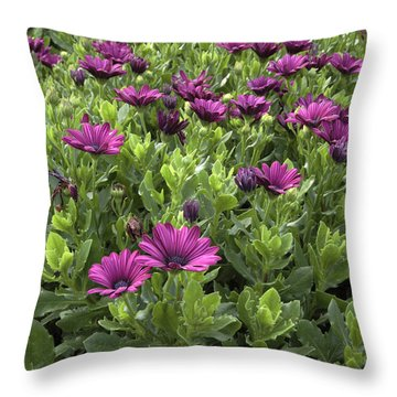 Prescott Park - Portsmouth New Hampshire Osteospermum Flowers Throw Pillow by Erin Paul Donovan