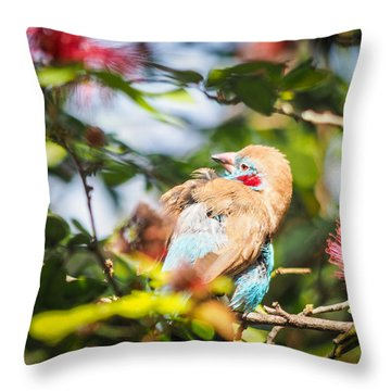 Red Cheeked Cordon Bleu Finch Throw Pillow