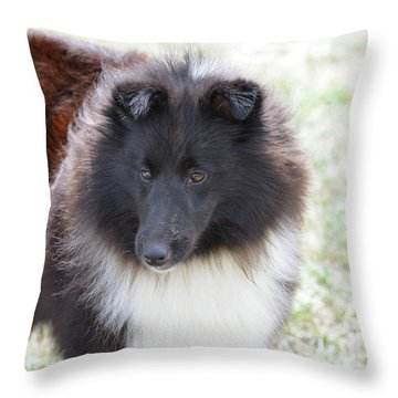 Pretty Black And White Sheltie Dog Throw Pillow