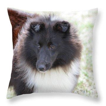 Pretty Black And White Sheltie Dog Throw Pillow by DejaVu Designs