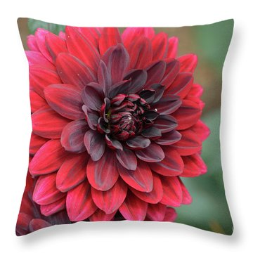 Pretty Blooming Red Dahlia Flower Blossom Throw Pillow