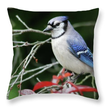 Pretty Blue Jay Throw Pillow