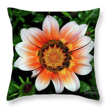 Throw Pillow featuring the photograph Pretty Gazania By Kaye Menner by Kaye Menner