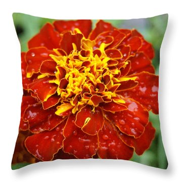 Throw Pillow featuring the photograph Pretty by Heidi Poulin