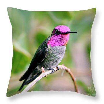 Pretty In Pink Anna's Hummingbird Throw Pillow