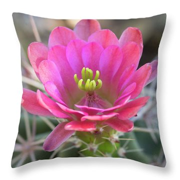 Throw Pillow featuring the photograph Pretty In Pink Hedgehog  by Saija Lehtonen