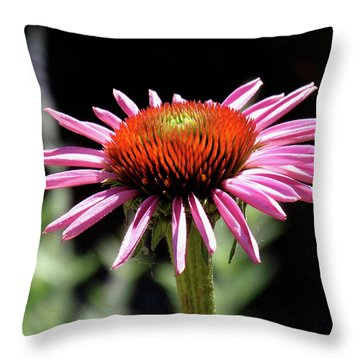 Pretty Pink Coneflower Throw Pillow by Rona Black
