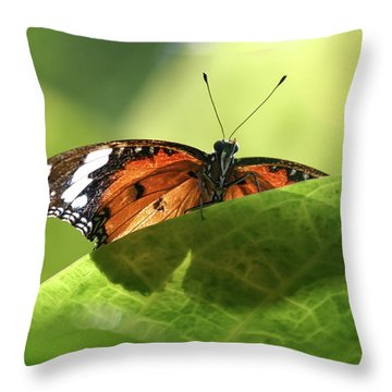 Preview - Throw Pillow