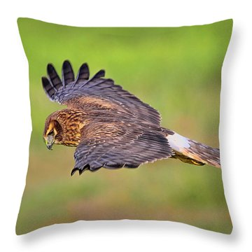 Prey Flyby Throw Pillow