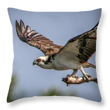 Prey In Talons Throw Pillow