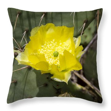 Prickly Pear Cactus Blossom - Opuntia Littoralis Throw Pillow