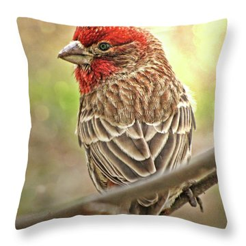Throw Pillow featuring the photograph Prince  by Debbie Portwood