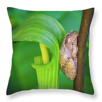 Throw Pillow featuring the photograph Prince Of The Pulpit by Bill Pevlor